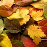 Болезни осенью