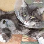 Лечение кота пиявками